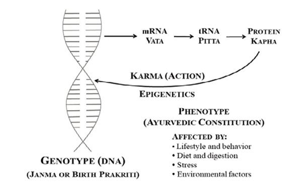 Ayurveda und Epigenetik: